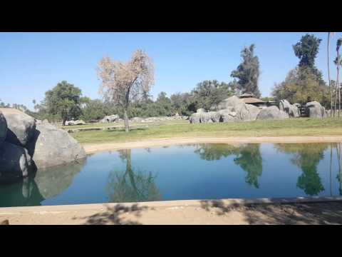New Fresno Chaffee Zoo's African Adventure. 2015