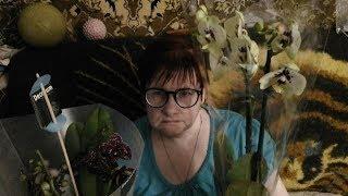 Орхидея Дикий Кот-подарок от подписчиков для Наталии! Всем - СПАСИБО!!!