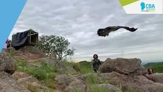 Liberamos aves silvestres recuperadas de la venta ilegal