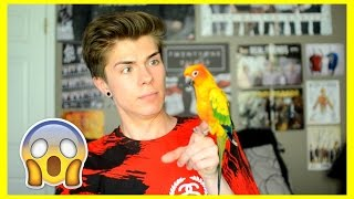 WATCH THIS BEFORE GETTING A PET BIRD!
