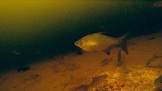Зимняя прикормка на рыбалке. Подводная камера.