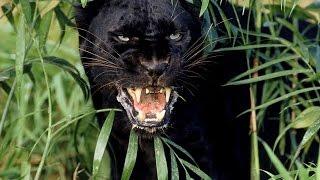 TERA THE NEXT Как получить ездового питомца (Чёрный леопард) ч. 1