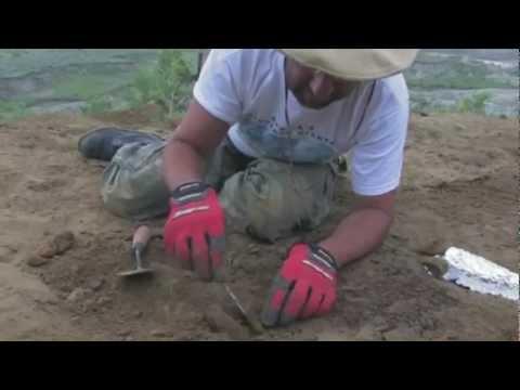 Paleontology- A Documentary