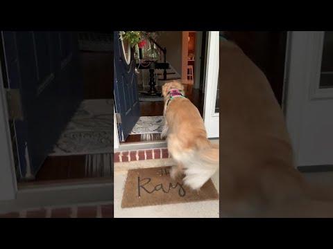 Bella loves to walk herself!