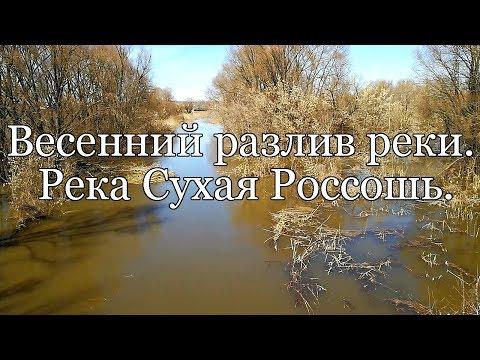 Весенний разлив реки.  Река Сухая Россошь.