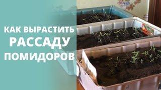 Видео 2. Как вырастить рассаду помидоров?(Видео 2. Как вырастить рассаду помидоров? Подпишись на наш канал - http://www.youtube.com/user/volargo?sub_confirmation=1 Всем приве..., 2015-03-19T12:21:18.000Z)