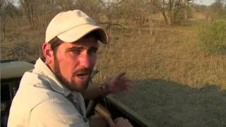 Sept 16 WildEarth Safari PM Drive ft Karula, Darting of Madiba Sindile