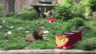 The Red Couch - Lions