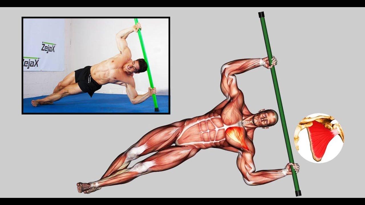 zejax double hammer muscle anatomy breakdown - youtube, Muscles