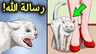إذا اقتربت منك قطة.. فهذا يعني أن هناك 3 رسائل من الله لك | سبحان الله !!