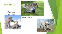 Canine Body Language Volunteer Orientation
