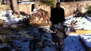 Man Runs Wheelbarrow Load Of Wood Down Snowy Hill