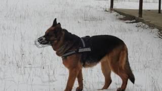 antrenament câini serviciu Jandarmeria Suceava