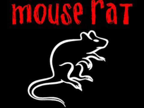 Mouse Rat   Anne