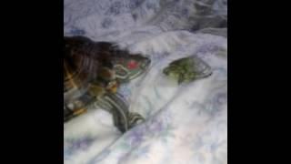 Приколы с черепахами