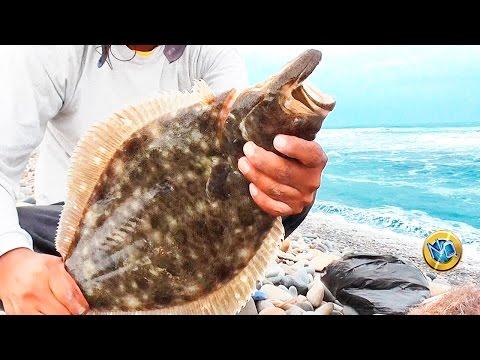 ☑️ PESCA ARTESANAL de Orilla【Vídeo Completo】Halibut #Fishing