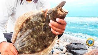 ☑️ Рибалок на Березі, 【Відео】Палтус #Fishing