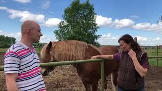 ТАМБЕЙ-дезинфекция курятника.болезни лошадей, кур, коров. йодная шашка диксам клиодезив