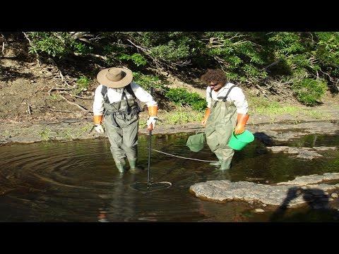 Electrofishing Equipment: How To Set Electro Fishing Backpack  Features, Electric Fishing Machine