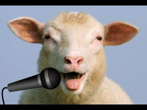 Oi Mush Lyrics sing along version