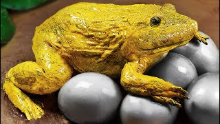 Stop Motion ASMR - Giant Golden Frog That Hunts Catfish And Koi Fish Cooked In The Original Mud