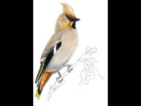 3 dimensional pencil art drawing bird making...........
