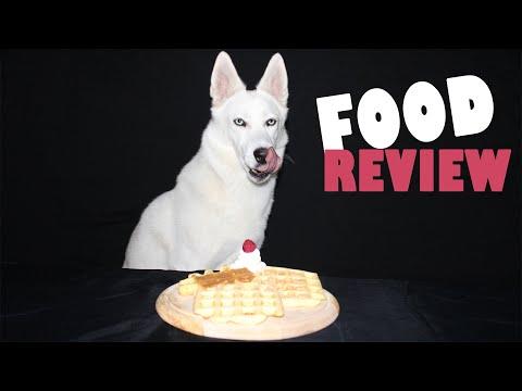 Dog reviews different Waffles! ASMR