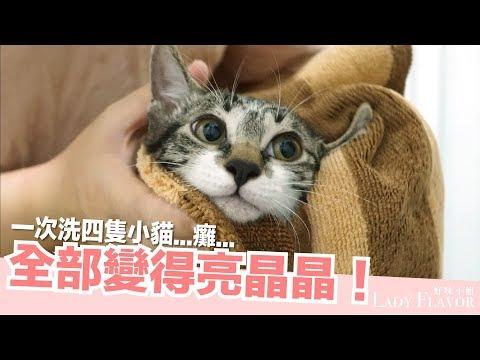 一次洗四隻小貓!全部變得亮晶晶【好味貓日常】EP20