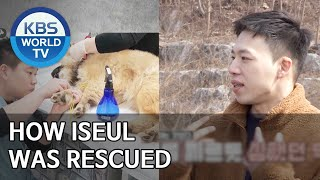 How Iseul was rescued [Dogs are incredible/ENG/2020.03.24]
