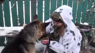 Талисман ополченцев - собака из Дебальцевского котла