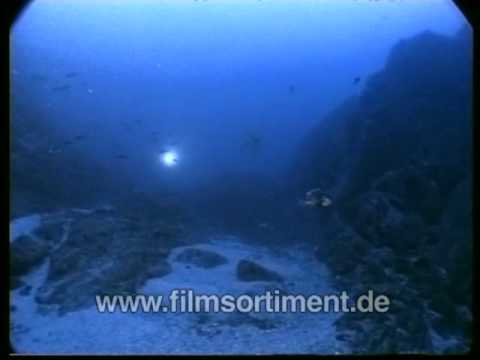 Schulfilm: WAS IST WAS - HAIE (DVD / Vorschau)