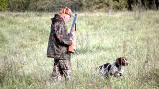 Охота с курцхааром подсадной фазан Латвия.