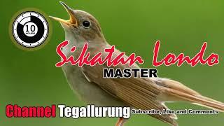 Gambar cover {10 Jam} Master Burung Sikatan Londo Terbaik Sepanjang Tahun |SEPUTAR INFO