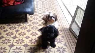 Suki and Sammy waiting for us on the stoep to go visit my parents. ...