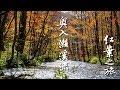 日本東北紅葉の旅 #05 (奧入瀨溪流)