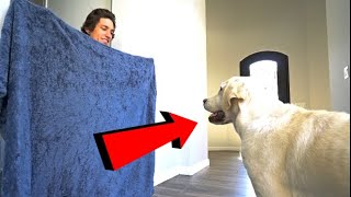 PRANKING MY DOG'S BY DISAPPEARING..