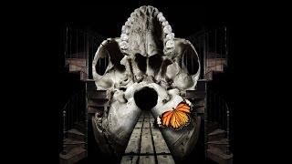 "Forty Shades - Studio recording ""Pillars of Doom"""