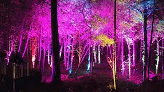 Magical woodland light & sound show at The Enchanted Forest 2018, Pitlochry, Scotland