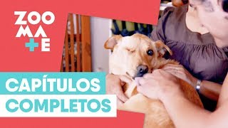 ZOOmate - Rescate animal | Capítulo 17