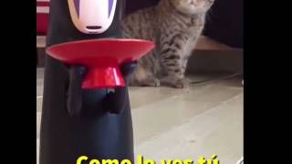 Sin Cara de Chihiro: el terror de los gatos| Tomatazos Ponte en el ...