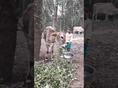 Athazha pooja kazhinjuvallo kanna