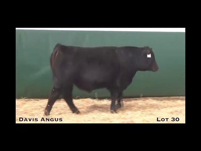 Davis Angus Lot 30