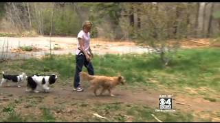 Woman Attacked By Fellow Dog Walker In Wayland