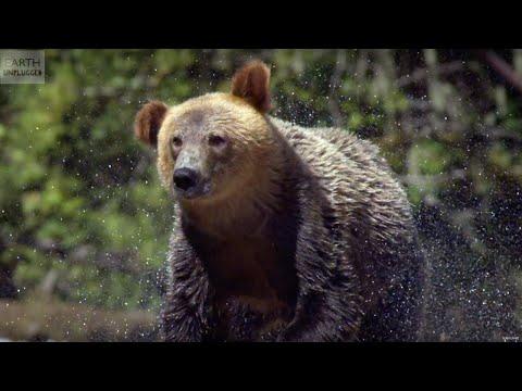 13 AMAZING Slow Motion Animals! | Earth Unplugged