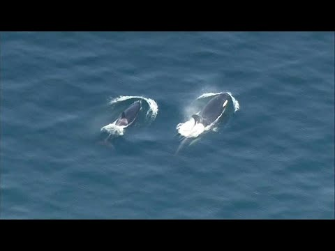 No Comment TV: Pod of orcas spotted frolicking in water near Seattle