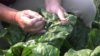 HOW TO: GARDEN INSECTS AND PESTS