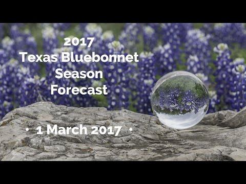 2017 Texas Bluebonnet Season Forecast
