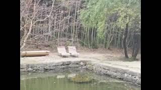 #담양 #죽녹원 #이승기 #이승기연못 #산책로