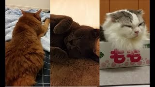 飼い主の部屋に集まる猫達です。 ウザがりながらも、なんだかんだで飼い...