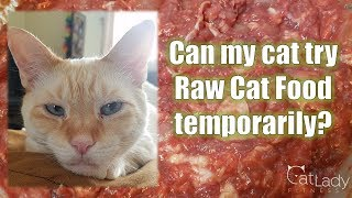 Can I Feed My Cat Raw Food Temporarily? - Cat Lady Fitness